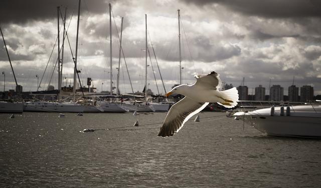 bird-212447_640