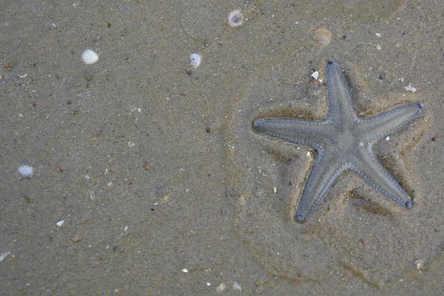 starfish-2223802_640