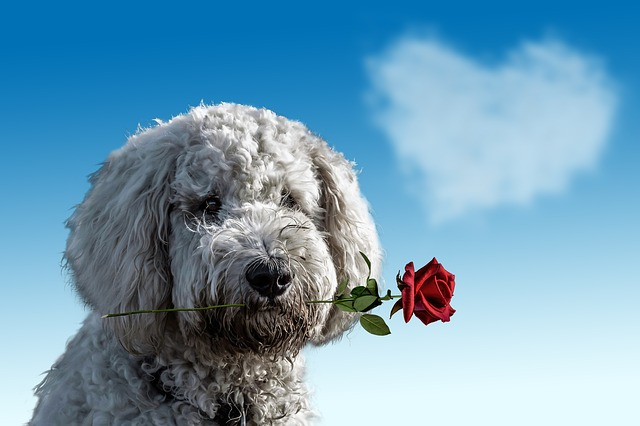 valentines-day-3135789_640