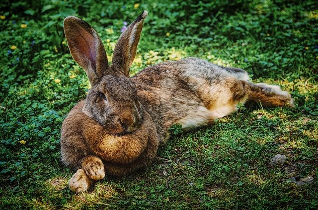 hare-4038246_640-feel