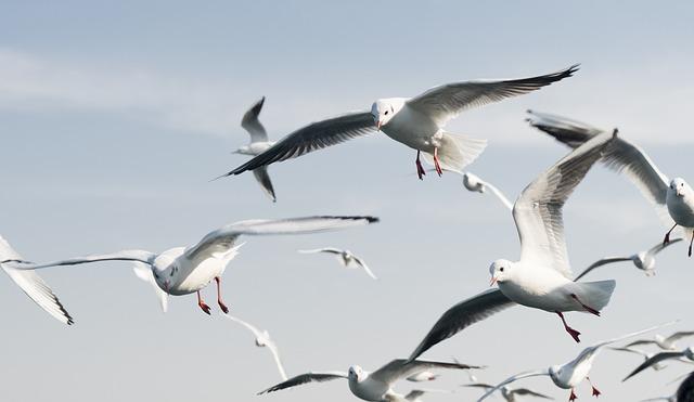seagulls-3384672_640 sat seminar